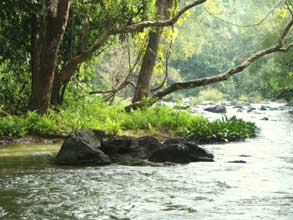 Places in Wayanad
